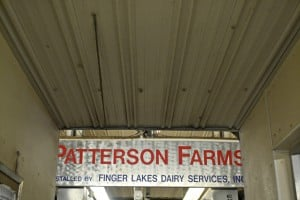 During the #NYSDairyTour2014, my husband and learned some invaluable lessons at Patterson Farms in Auburn, NY.