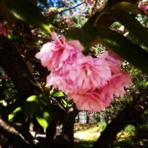 frugal gardening, easy plants for beginners, novice gardening