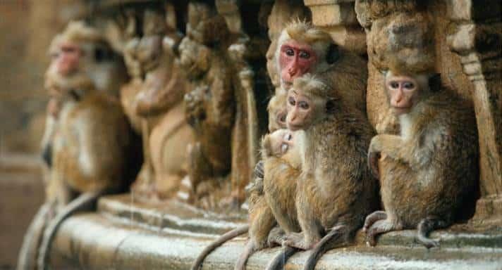 Disney nature's Monkey Kingdom Review #MonkeyKingdom