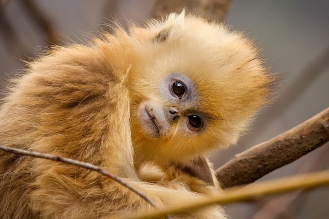 3 Reasons Kids Should See Disneynature's Born In China